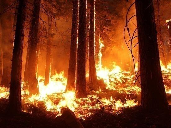 Огромный природный пожар бушует на Ямале