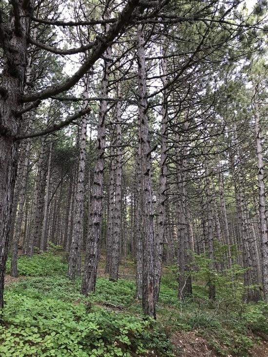 Участница турнира по ориентированию потерялась в лесу Крыма
