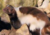 Список животных, которых можно содержать в контактных мини-зоопарках, утвердил Росстандарт
