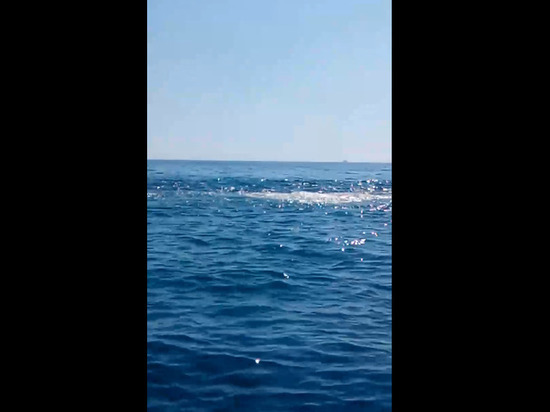 В соцсетях сообщили о фонтане фекалией, бьющем в море у севшего на мель корабля Rio