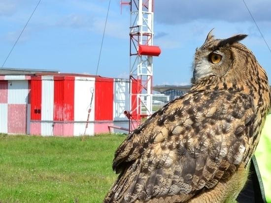 В Пулково нашли нарушения в работе службы по отпугиванию птиц