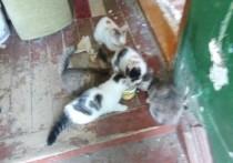 Пятерых котят и кошку бросили в расселенной квартире Салехарда