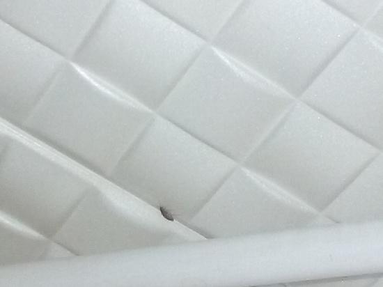 В Оренбурге завелись неубиваемые тараканы