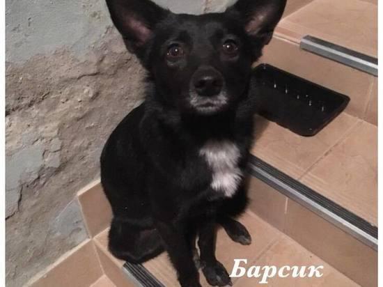 Пес из ярославского приюта спас жизнь хозяину