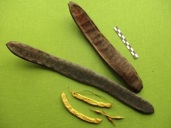 В Тверскую область прислали семена растений из кратера Нгоронгоро