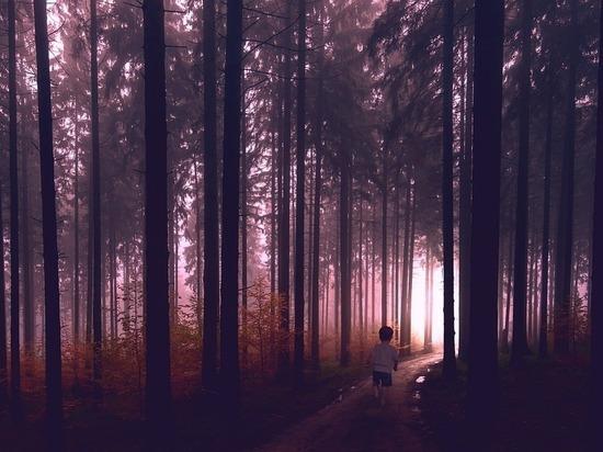 Потерявшегося в лесу Северной Осетии трехлетнего мальчика нашел Тарзан