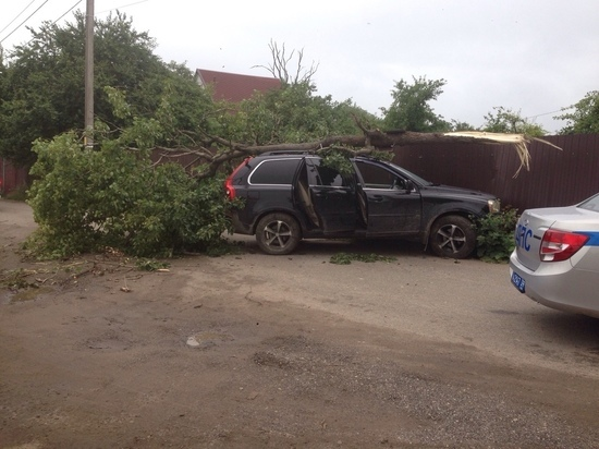 В Калининграде на джип упало дерево