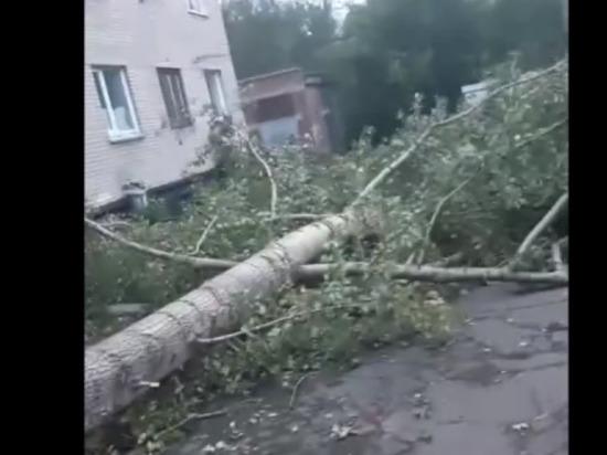 Ураганный ветер повалил деревья на правом берегу