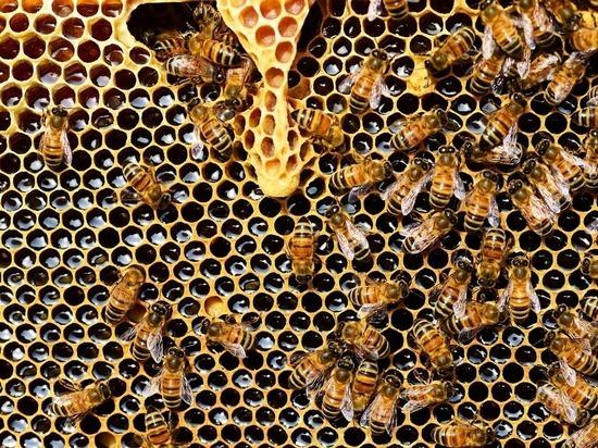 Массовая гибель пчел зафиксирована на юге НСО