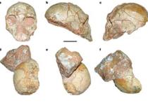 Самые древние окаменелые останки Homo sapiens обнаружили ученые в пещере на юге Греции