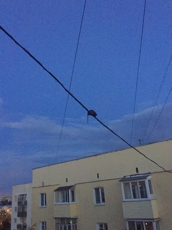 В Ярославле крысы бегают по проводам