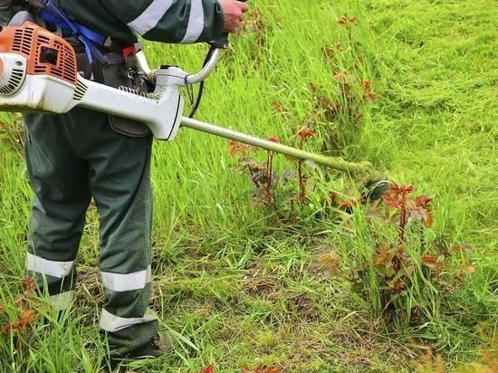В Улан-Удэ выкосят полмиллиона «квадратов» травы