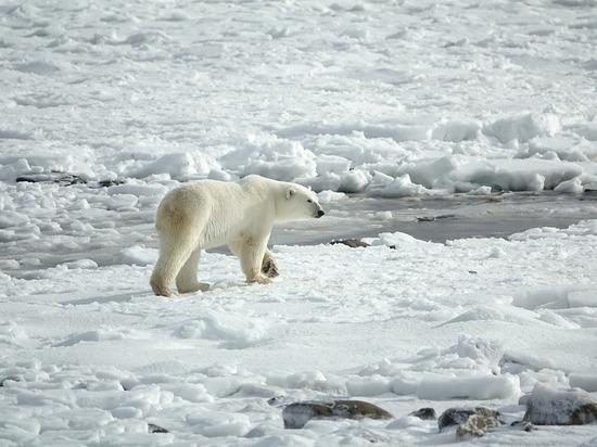 Студентки ТИУ отправятся в экспедицию по изучению Арктики