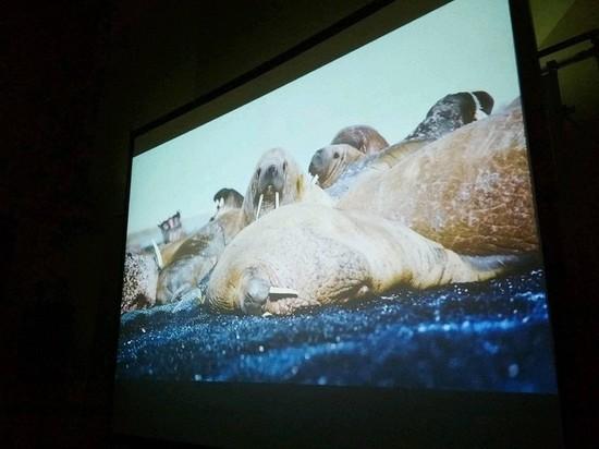 Фильм с моржом из Удмуртского зоопарка представят на Тулунском кинофестивале