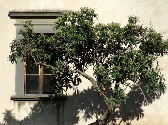 Назван неожиданный эффект зелени за окном