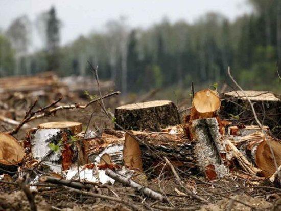 Директор богучанской фирмы незаконно вывез лес на 37 млн рублей