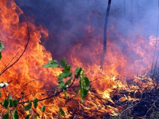 Из-за пожаров в лесах Иркутской области ввели режим ЧС