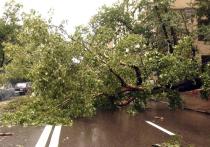Прикрываться плохой погодой, чтобы не платить автовладельцам за упавшие на машины деревья, запретил коммунальщикам Верховный суд