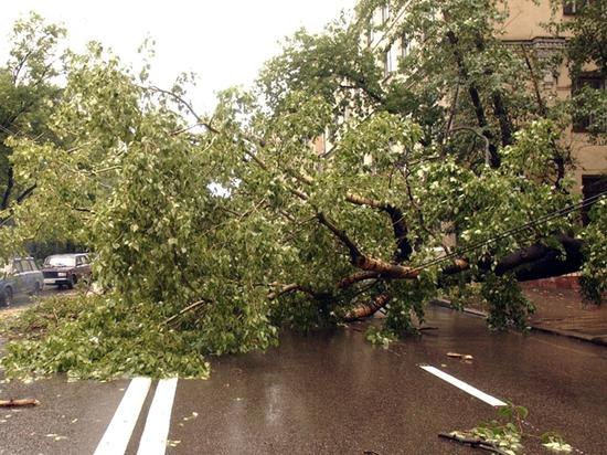 Ветер не оправдание: москвичка засудила коммунальщиков за упавшее дерево