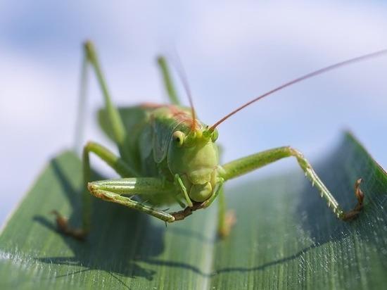 Итальянские ученые призвали человечество питаться насекомыми