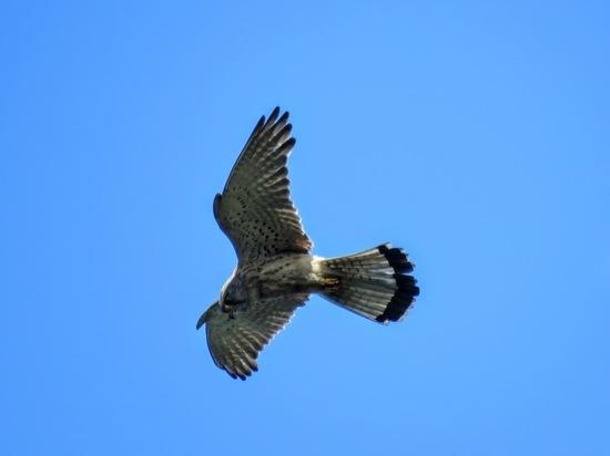 Кемеровчанка сфотографировала в городе редкую птицу