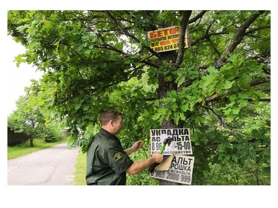На территории Серпухова борются с незаконной рекламой на деревьях