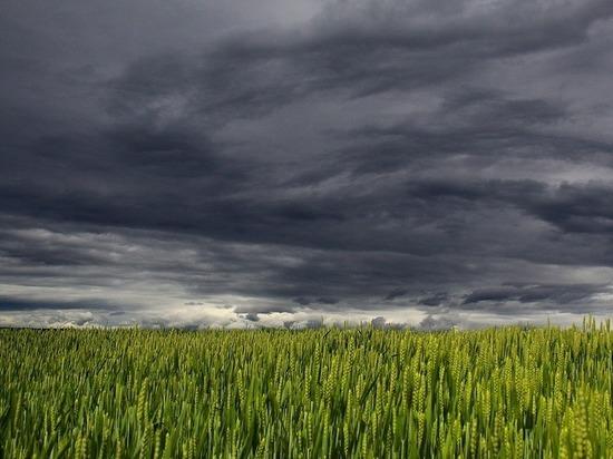 Синоптики рассказали, когда ЦФО зальют дожди