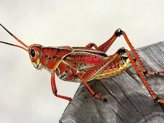 Почему опасно есть насекомых, рассказала диетолог