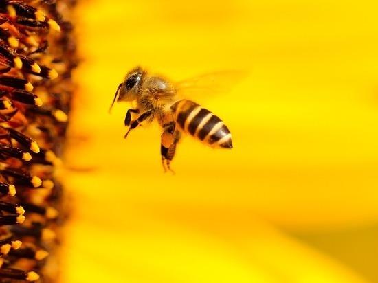 Массовая смерть пчел в областях: вГД обсудят проблему