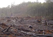 «Гринпис»: существует угроза повторного наводнения в Иркутской области