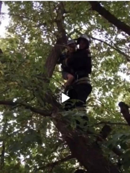 В Бузулуке спасли десятилетнего верхолаза