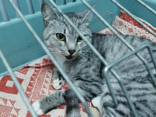 В Томске полиция расследует инцидент с двумя котами, выброшенными с 8-ого этажа