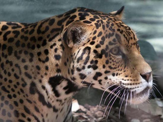 Прокуроры на Кубани изъяли целый зоопарк: волков, рысей, ягуаров, попугаев и обезьян