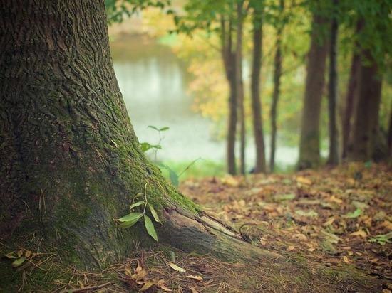 После случаев исчезновения людей в лесу тульский СУСК опубликовал предупреждение