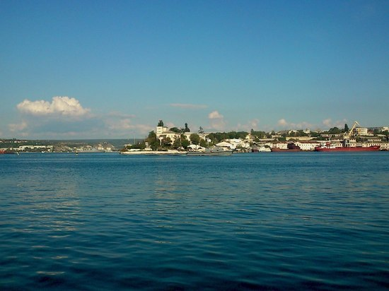 У берегов Крыма обнаружили сразу несколько дельфинов-мутантов