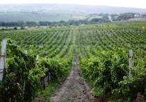 Российские вина добросовестных производителей не подорожают после изменения акциза