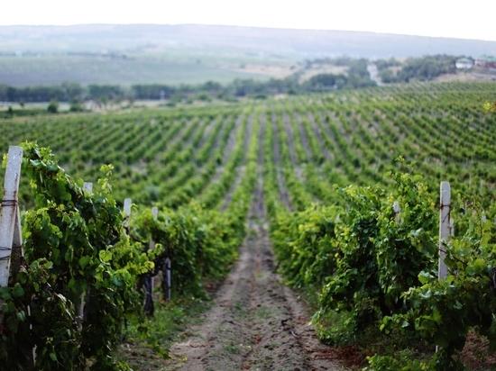 При этом с рынка может уйти продукция из некачественного виноматериала