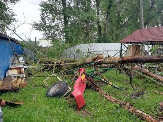В Тульской области 20-метровый тополь рухнул на детскую площадку