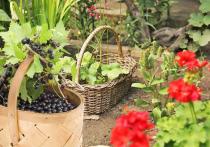 О плюсах и минусах ягод рассказала диетолог из Волгограда