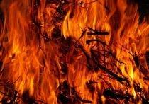 Синоптики предупредили о лесных пожарах в ЯНАО из-за жары