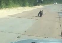 Медвежата «ловят машины» на трассе в ЯНАО