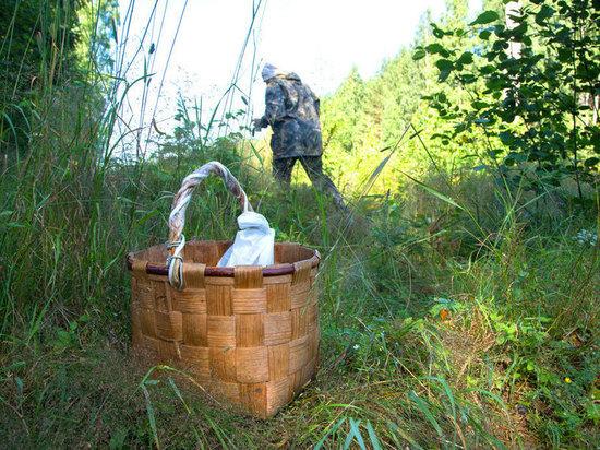 Грибы жизни: волонтёры рассказали, как не пропасть в тверских лесах