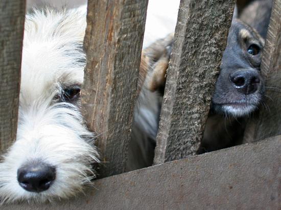 Минприроды определило, как часто должны кормить собак в приютах