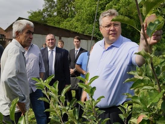 Глава Ставрополья оценил реконструкцию больницы и развитие садоводства