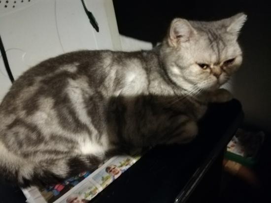 В Гае хозяйка получила травму, пытаясь достать кота