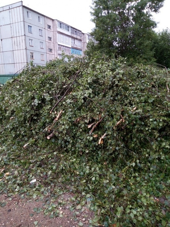 Жителей в Ржеве Тверской области обеспокоили кустарники