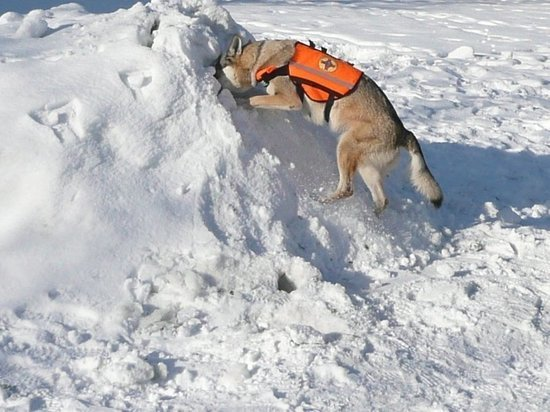 Туристов из Барнаула накрыло лавиной на Алтае, есть погибший