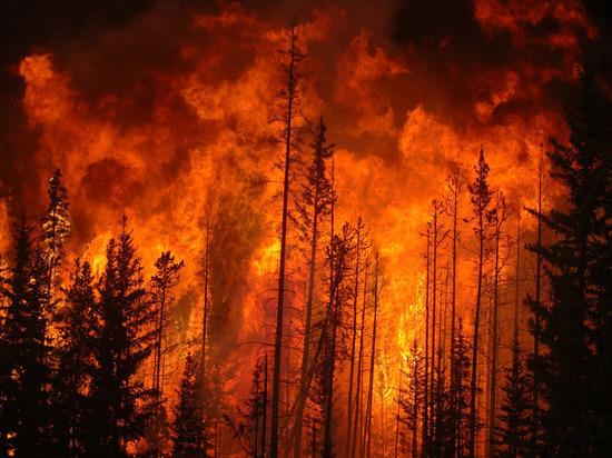 В Красноярском крае и Иркутской области горит 500 тыс га леса