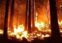 Девять огромных пожаром сожгли более 418 га леса на Ямале