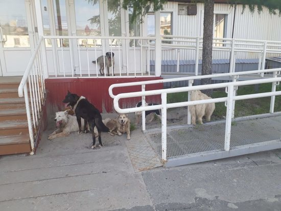 Жителей Тарко-Сале пугает стая собак у детской поликлиники
